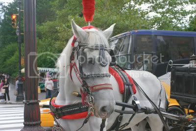 One of the 200 carriage horses that work in New York City. Photo By: Andrew Schwartz