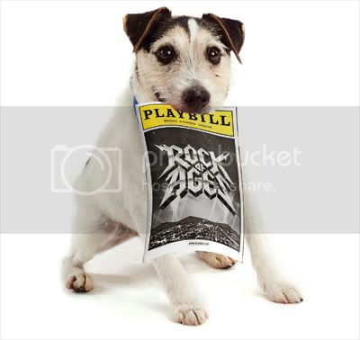 Bandit just loved Rock of Ages. The wired hair Jack Russell terrier mix is about 2 years old.